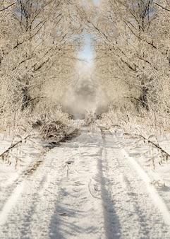 Winter road in snowy frosty forest landscape