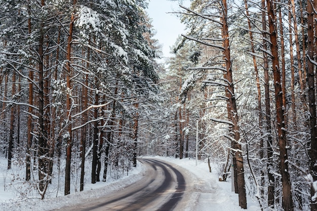눈 덮인 숲, 아름다운 겨울 배경을 통해 겨울 도로