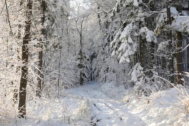 Зимняя сельская дорога между деревьями, покрытая инеем