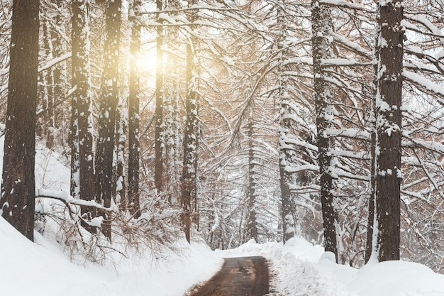 Winter scene, mountain road with trees and snow on both sides