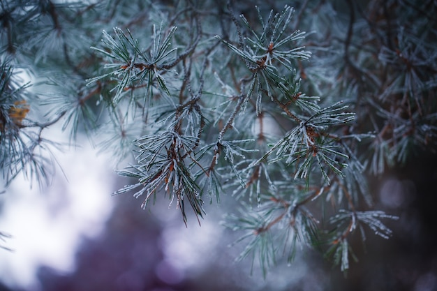 冬のシーンの自然の背景