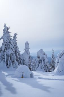 エスキモーのイグルーのある冬のシーン。雪の吹きだまりとモミの木のある素晴らしい景色
