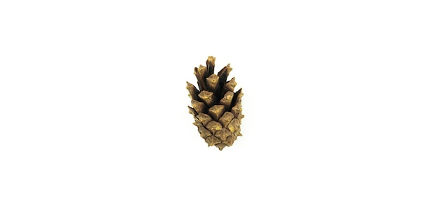 Winter season, concept of pine cone on isolated white background, macro photo and close up. high quality photo