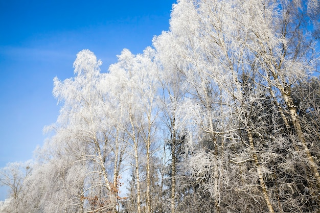 Winter season in the forest