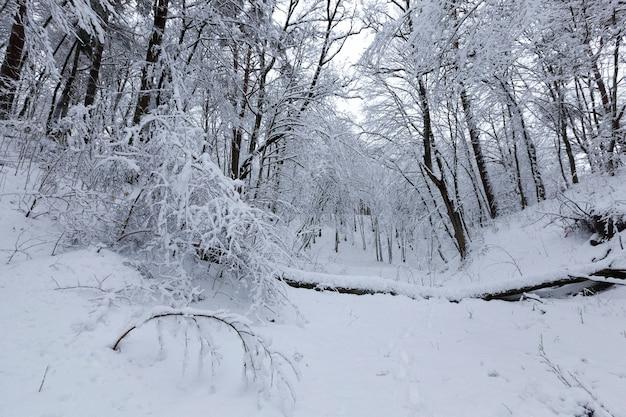 吹雪や降雪の後の雪の中で葉のない落葉樹、裸の木のある森や公園の冬の季節