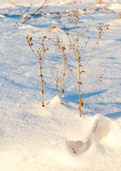 冬の季節。白い雪が閉じた草を漂い、寒さの始まりとともに乾きます。
