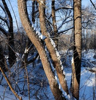 Зимний сезон с деревьями