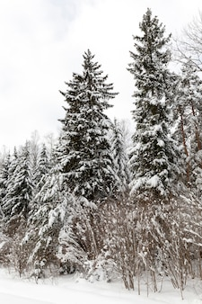 Winter season of the year in the forest