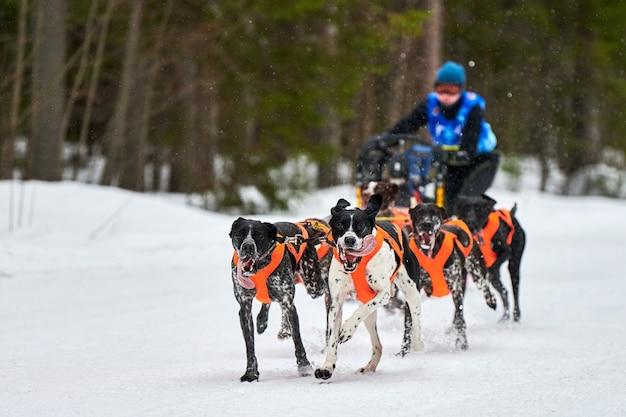 Зимние гонки на собачьих упряжках