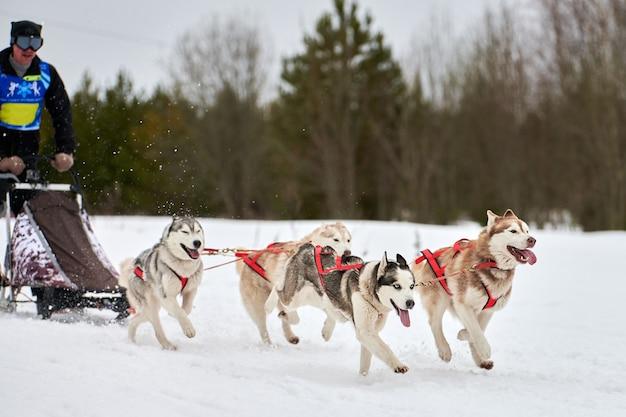 Зимние гонки на собачьих упряжках в горах