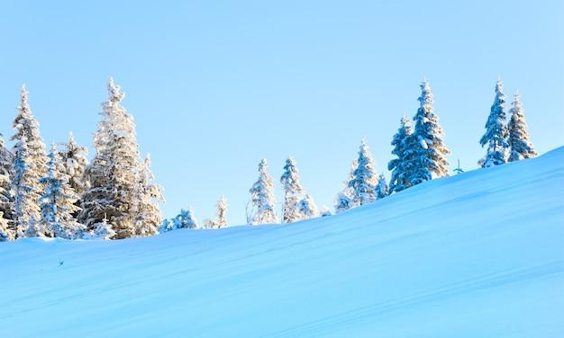 Зимние заснеженные ели на склоне горы на фоне голубого неба (карпаты, украина)
