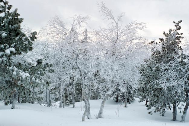 Зимний заснеженный горный лес в инее в пасмурную погоду