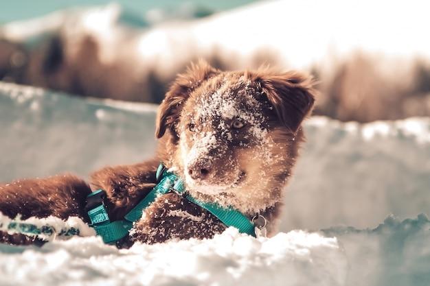 Зимняя снежная собака