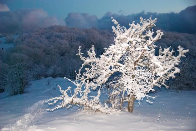 밤에 겨울 눈 숲