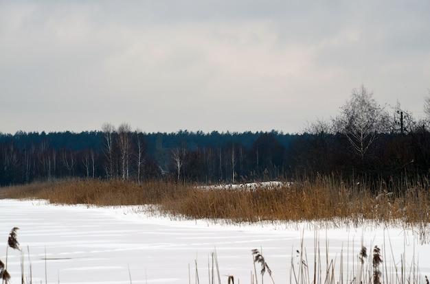冬の雪の森の川の風景。