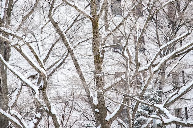 Winter snow in sapporo, hokkaido, japan