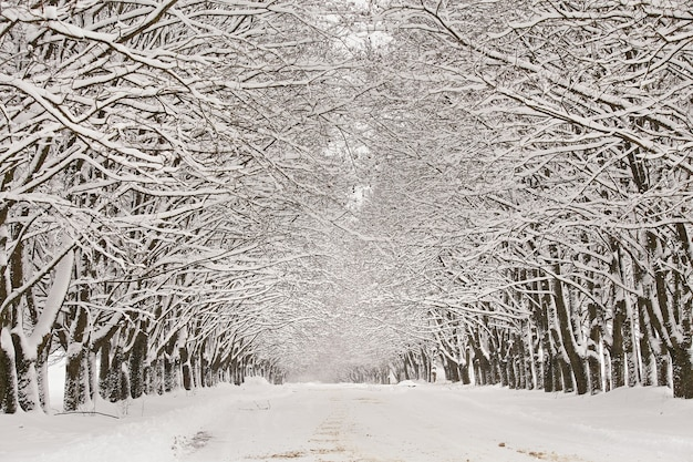 冬の雪に覆われた路地。カエデの木の枝。村の雪に覆われた曲がりくねった田舎の未舗装の道路。吹雪の後の冬のワンダーランド。クリスマス休暇、ベラルーシへの旅行