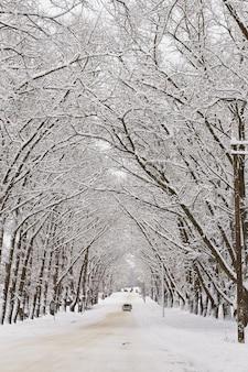 冬の雪に覆われた路地。ポプラの木の枝。町の雪に覆われた曲がりくねった田舎のアスファルト通りの車。吹雪の後の冬のワンダーランド。クリスマス休暇、旅行。垂直