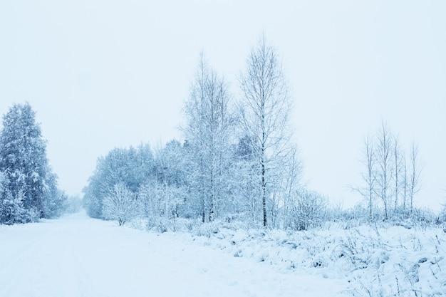 Зимний снежный пасмурный пейзаж с деревьями