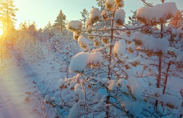 日没時の冬の雪に覆われた森。美しいクリスマスの風景