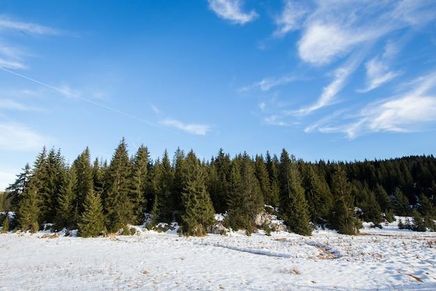 冬の雪に覆われた森の風景