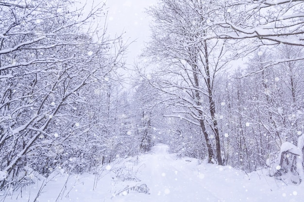 Winter snowy forest in the park. snowstorm in park, winter landscape