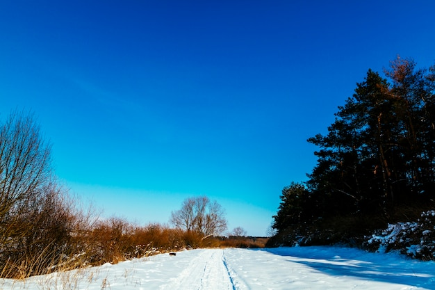 Winter snowy landscape against blue clear sky