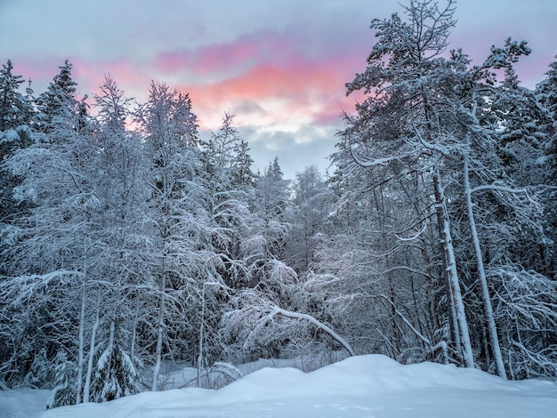 Зимний снежный северный лес вечером. глубокая зима северный заснеженный лес в карелии.
