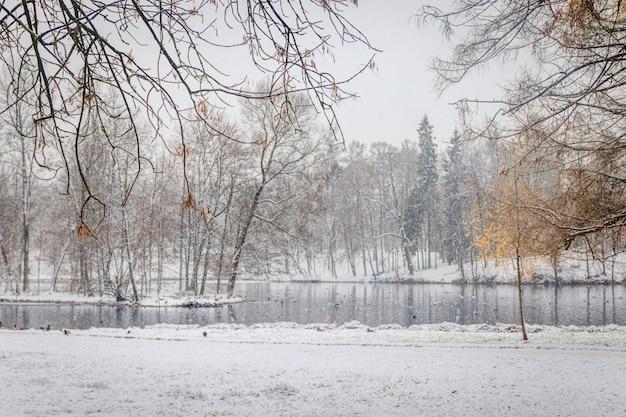 Winter snowy park-like landscape. winter landscape. heavy snowfall in the park . first snow.