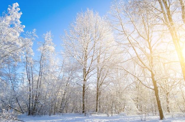 푸른 맑은 서리가 내린 하늘을 배경으로 눈 덮인 나뭇 가지의 겨울 종.