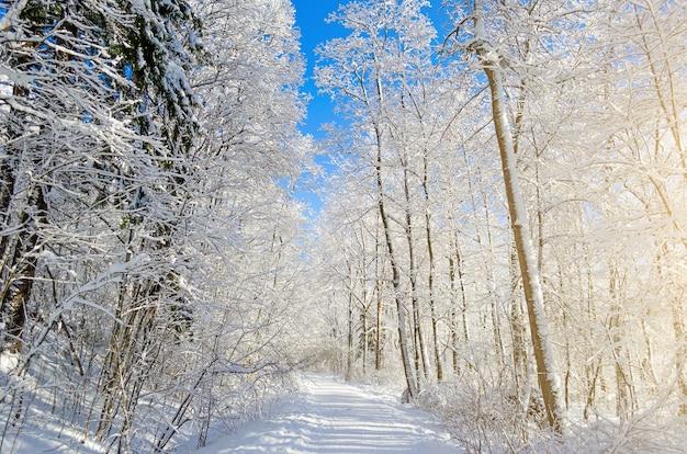 Зимние виды заснеженных ветвей деревьев на фоне голубого ясного морозного неба.