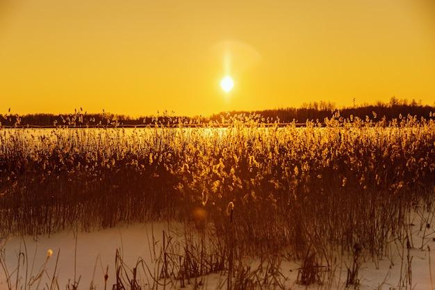 空にまぶしい冬の太陽雪に覆われた自然湖パンパス草白い霜