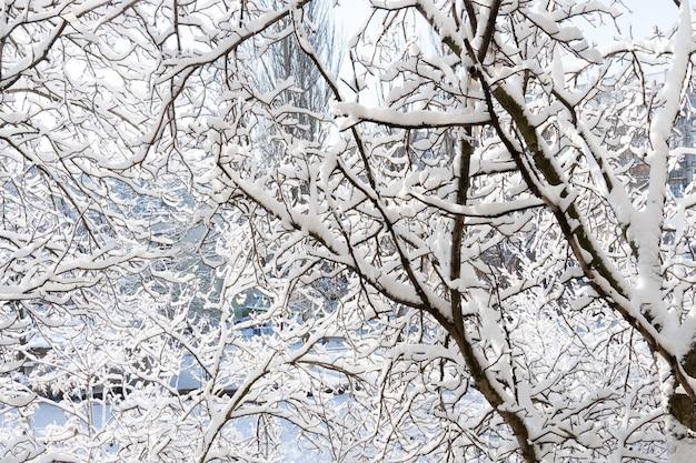 冬の晴れた日。窓からの眺め。