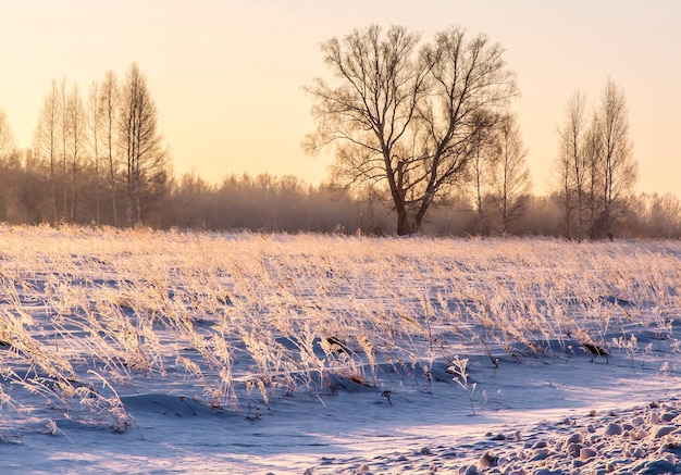 Winter sunrise in pink colors