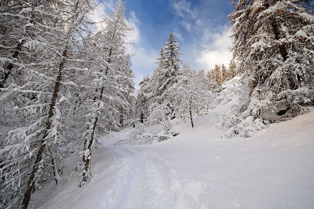 Winter time in the alps, wood in the snow