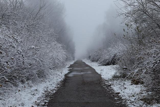 나무와 아름다운 겨울 풍경 사이의 겨울 트레일