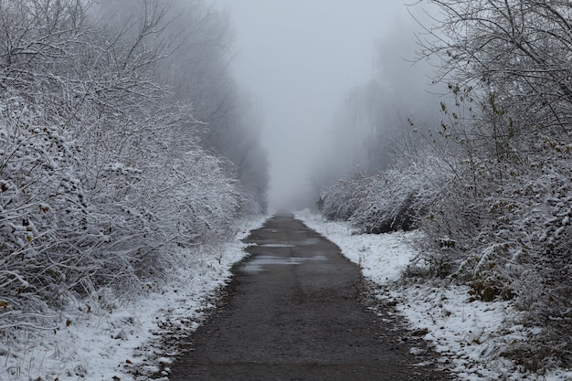 Winter trail between trees and beautiful winter landscape