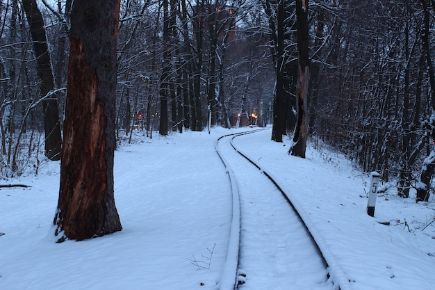 Winter train in the woods