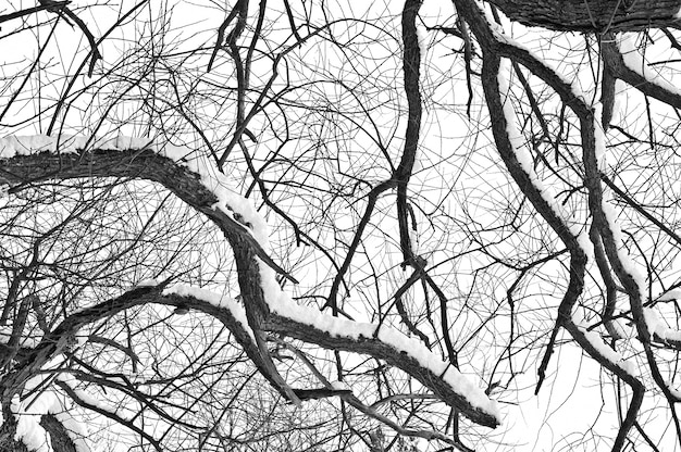Winter tree conceptual image.
