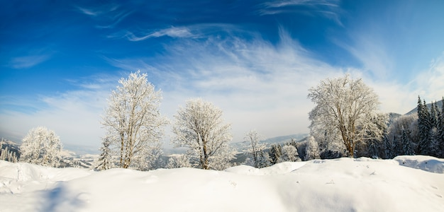 Зимнее дерево в поле с голубым небом