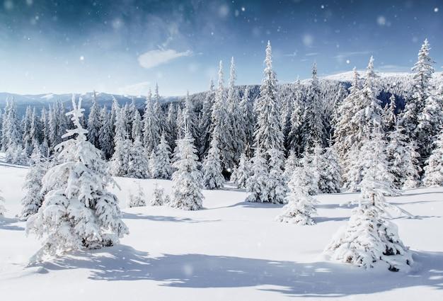 雪の中で冬の木。カルパチア、ウクライナ、ヨーロッパ。ピンぼけ光効果、ソフトフィルター。