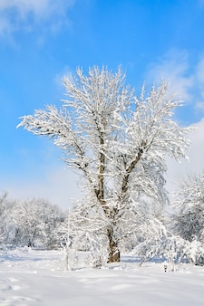 Winter tree in snow on blue sky background. snow covered trees.