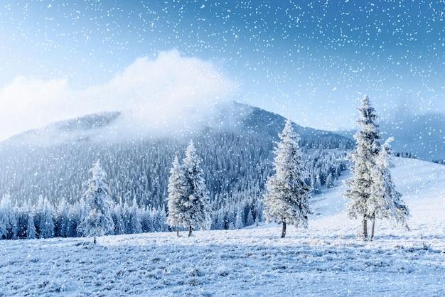 Winter tree in snow. carpathian, ukraine, europe. bokeh light ef