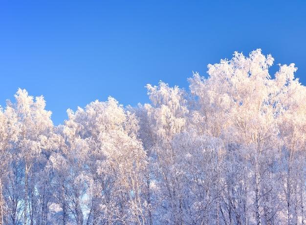 冬の木。澄んだ青い空を背景に厚い霜で覆われた枝