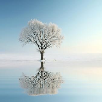 雲ひとつない朝、霜に覆われた冬の木々