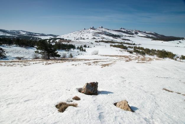 山の冬の木。