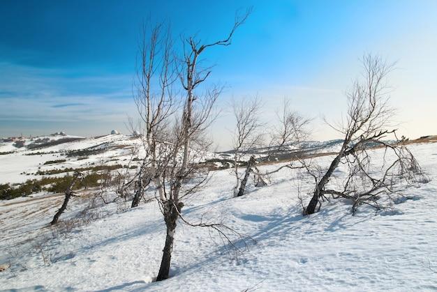Зимние деревья в горах.
