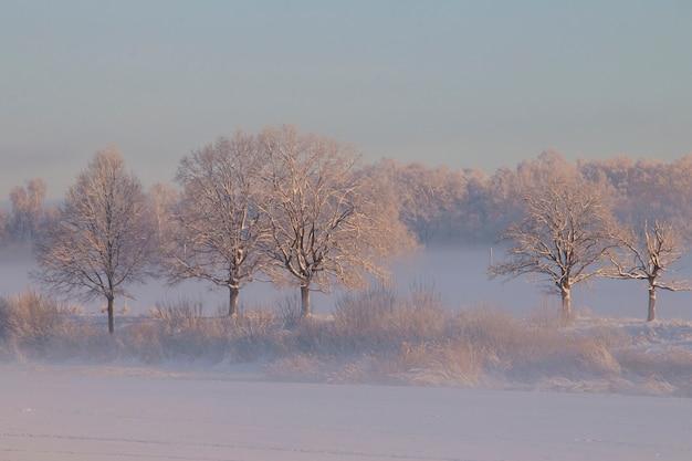 Зимние деревья розовый туман на рассвете