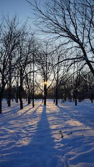 冬の木、夕日