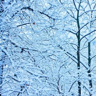 Зимние деревья с ветвями, покрытыми снегом